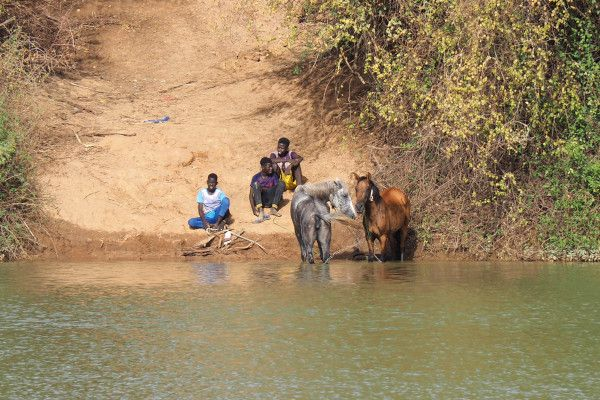 Les deux juments attendent de l'autre côté du fleuve… elles doivent bien se douter de quelque chose!