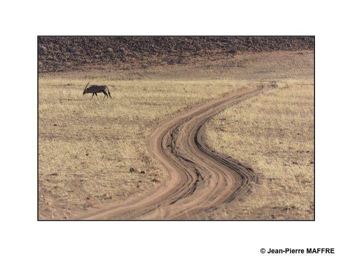 Le parc national d'Etosha reste encore l'une des plus grandes réserves animalières au monde, s'étirant sur 350 km d'est en ouest, avec une superficie de 22 275 km².