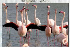 Parc ornithologique du Pont de Gau suite...