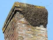 Essaims d'abeilles se fixant n'importe où