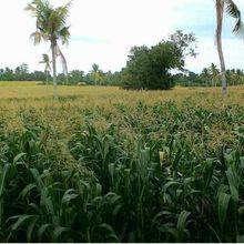 Le point de vue d'un agriculteur insulaire : la technologie, ça compte !