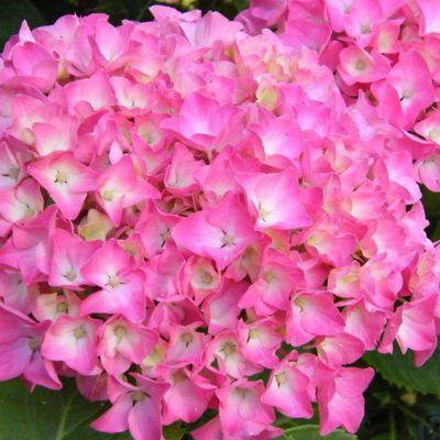 Des Fleurs volée aux Japonnais