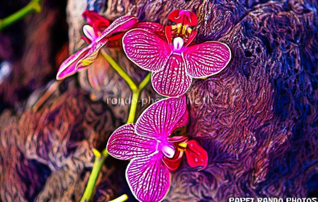ORCHIDEES MANIA