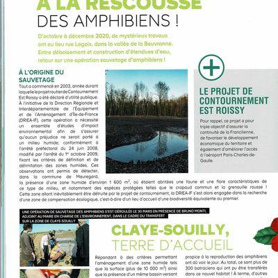 Où sont bien passés les 300 amphibiens que la direction des routes aurait transféré dans une mare à Souilly?