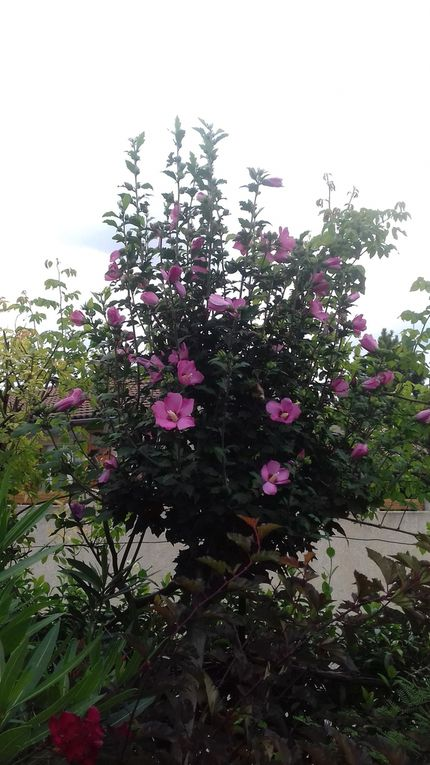 Le jardin Le Clos fleuri en août ......
