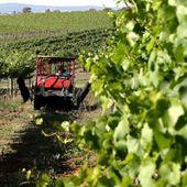 Le travail dans les fermes en Australie est-il une bonne idée ?
