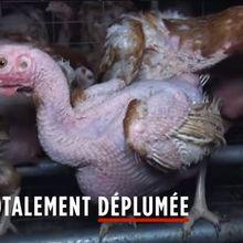 La «cause animales» sur le Monde et ailleurs: dérapages médiatiques et démagogiques