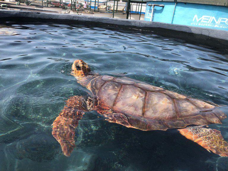 Turtle Nursery Fuerteventura