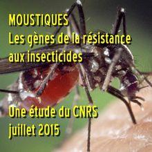 CNRS - Communiqué - Où l'on reparle de la résistance des moustiques aux insecticides