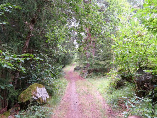 Le chemin en forêt et quelques repères...