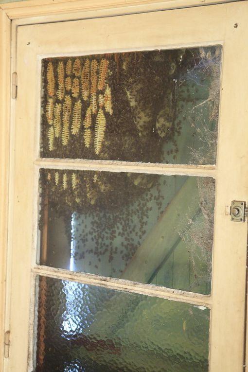 Suite du reportage sur la ruche improvisée..