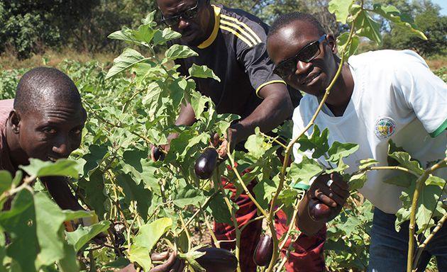Les fermes agro-écologiques d'ActSol en Casamance