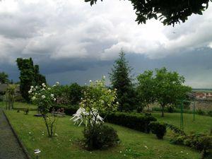 En été 2006, sous un ciel d'orage et les agitations du vent  le grand thuya s'incline mais lui encore enfant reste droit le cimier pointant fièrement les nuées