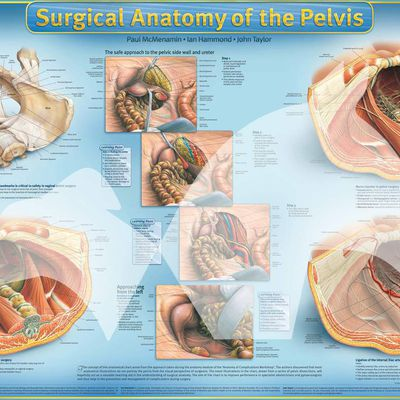 Surgical Anatomy: Taking Surgery as a Carrier Choice