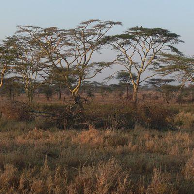 J12 - Au pays du Roi Simba, l'histoire de la vie