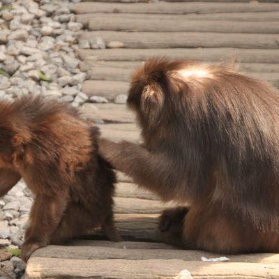 Des macaques et du fun!!