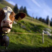 Pour abreuver ses vaches, la Suisse vient puiser son eau en France