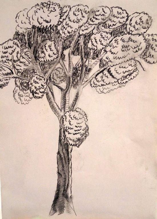 Entrainement pour dessiner des arbres