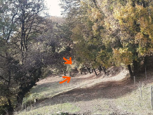 Ton AnniVERS'air en forêt