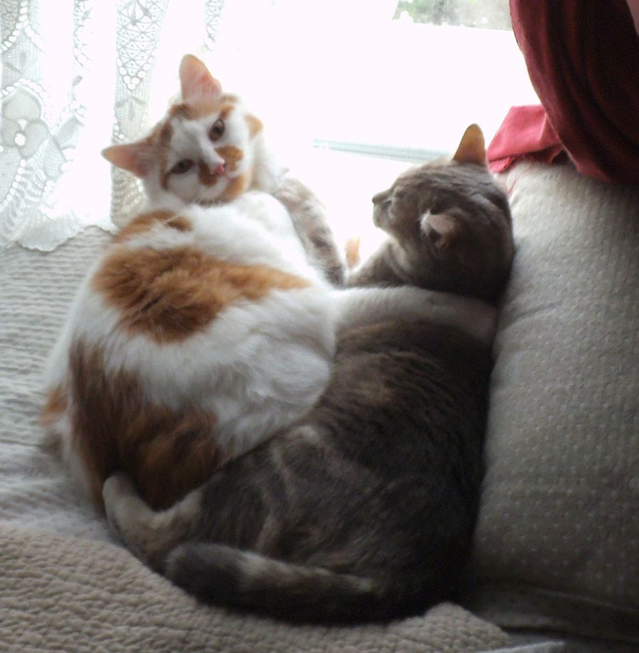 Lilou et Shanon ,  petit câlin