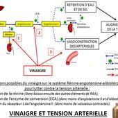 VINAIGRE DE CIDRE ET TENSION ARTERIELLE