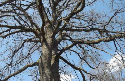 """Visionnage à domicile du film """"Les arbres remarquables, un patrimoine à protéger"""""""