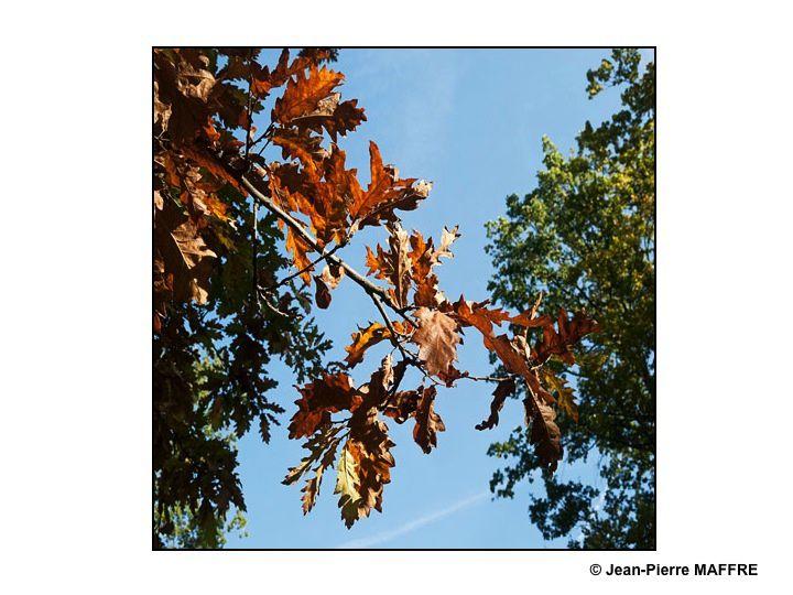 Les feuillages jaunissants de l'arbre enchantent le regard à cette saison si colorée.