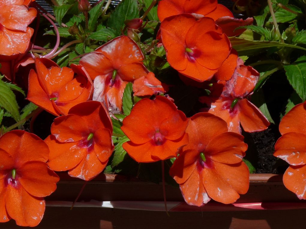 Fleurs 145