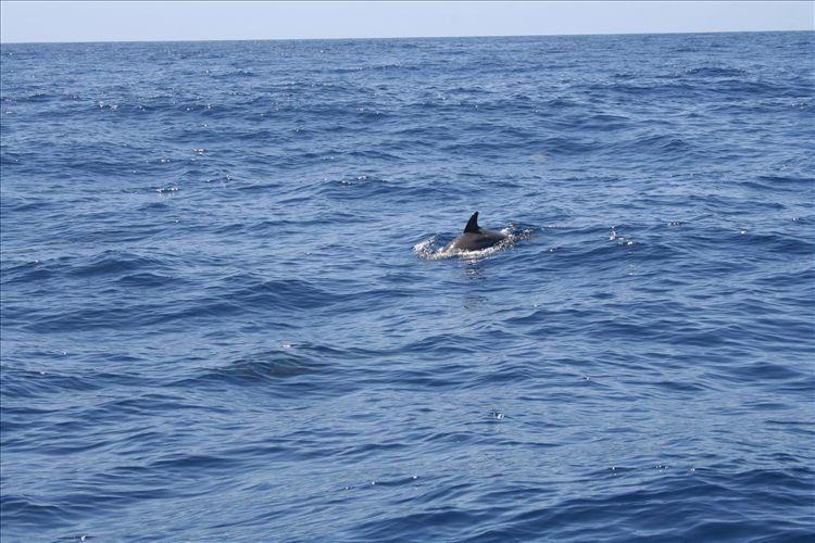 Quelques photos de la semaine de vacances de Julien et Elodie à Mayotte (septembre 2007) avec: la plage Ngouga, les makis, une sortie baleine et dauphins, des photos du nord de l'île...