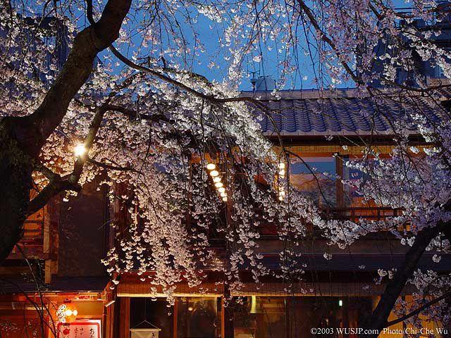 Album - sakura