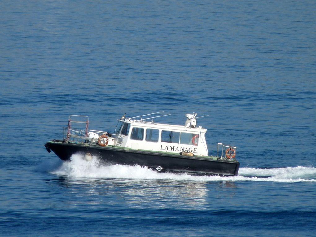 Touline , vedette du service de lamanage du port de Toulon