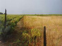 Rocs-Epine restant dans une ancienne parcelle de vigne,  Anjou, Cl. Elisabeth Poulain