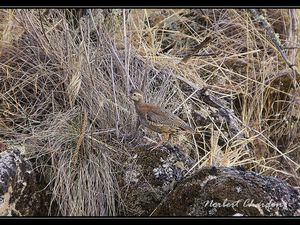 Nous continuons notre périple plus à l'intérieur des terres dans le paysage des Sierras. Les pies bleues y sont abondantes. De même, que les perdrix et les pigeons ramiers.