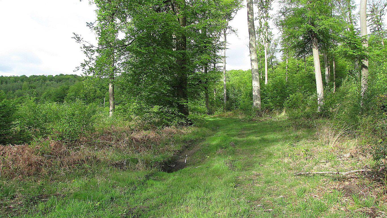carrefour_Chemin du Plessis-Brion_Sentiers (parcelle 191)