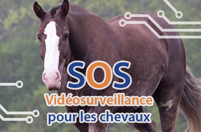 Sécurité et vidéosurveillance pour protéger les chevaux ... même dans un lieu isolé.