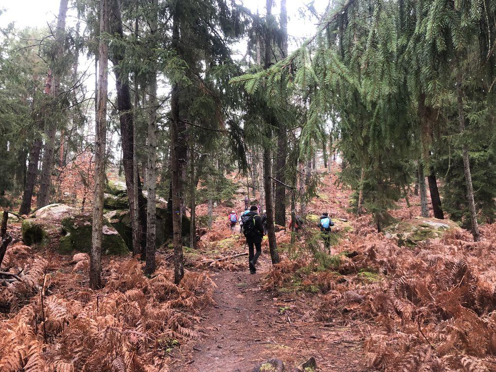Randonnée de Fontainebleau à Bois-le-Roi, 18,5 km.