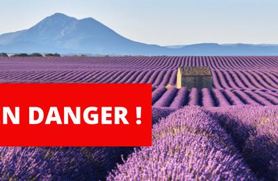L Union Européenne va classer les huiles essentielles en substances toxiques comme les medicaments