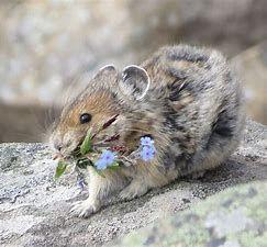"""Petites bêtes dans les cuisines et les jardins/ Comment les éloigner """"naturellement"""" ? Ou tout simplement, apprendre à les observer tranquillement (fiche véto)"""