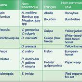 Allergie aux venins d'hyménoptères: diagnostic et prise en charge