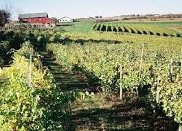 Viticulture in Iowa