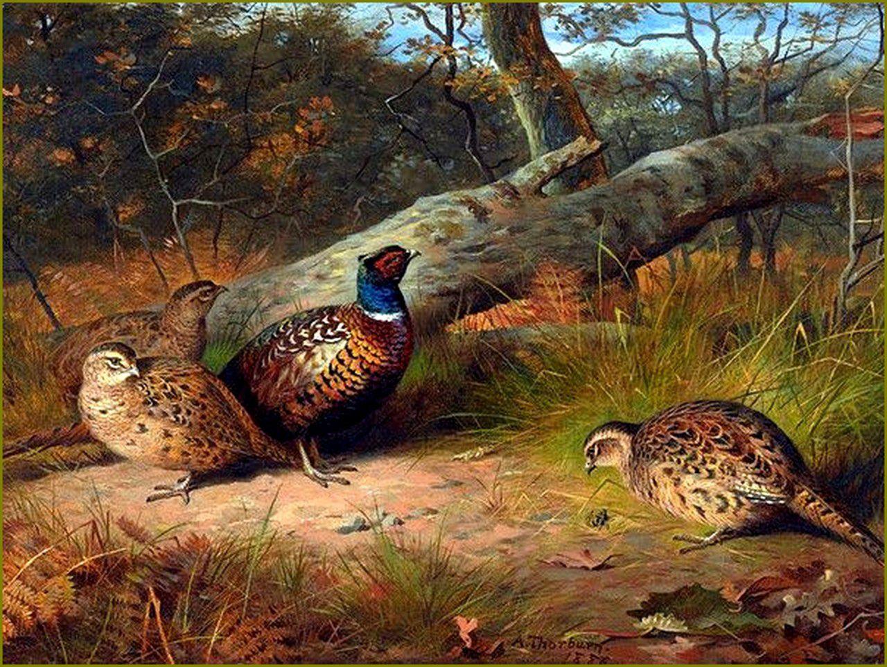Oiseaux en peinture -Archibald Thorburn