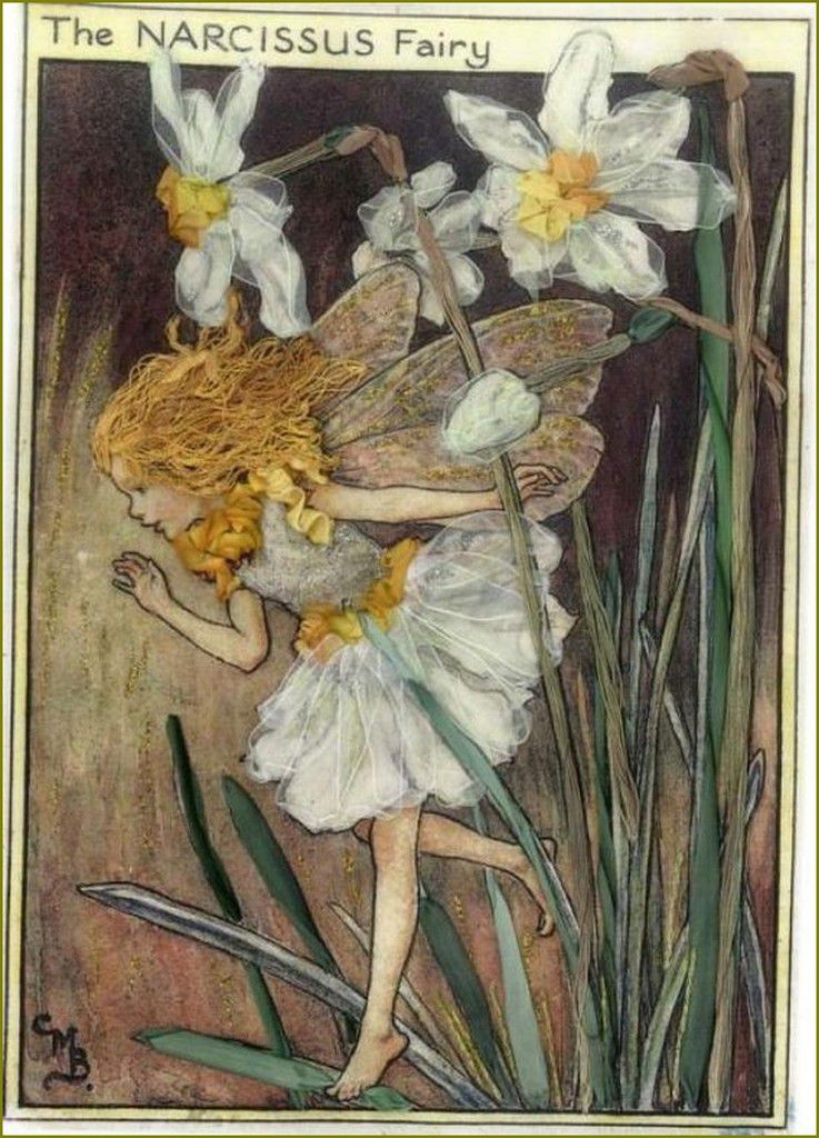 Cicely Mary Barker narcisses