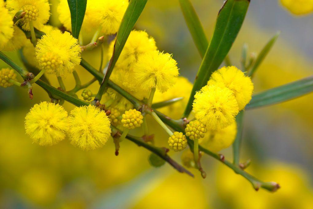 """Bougainvilliers, mimosas et thé à la menthe... """"L'imagination est la liberté de l'esprit""""-  Angel Parra"""