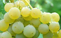 #White Blend Wine Producers New York Vineyards
