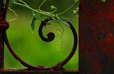 Le désir: MANDOLINE... pour une entr'aperçue (...)