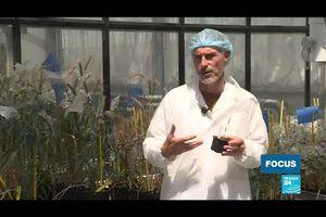 Réchauffement climatique : les agronomes français à la recherche du blé de l'espoir!