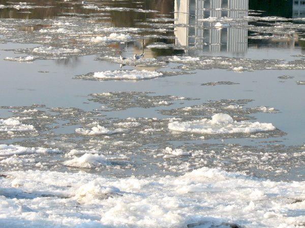 Loire glacée à Nantes