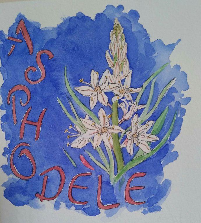 Mon herbier de Crète