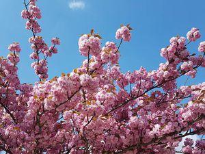 Les arbres en fleur