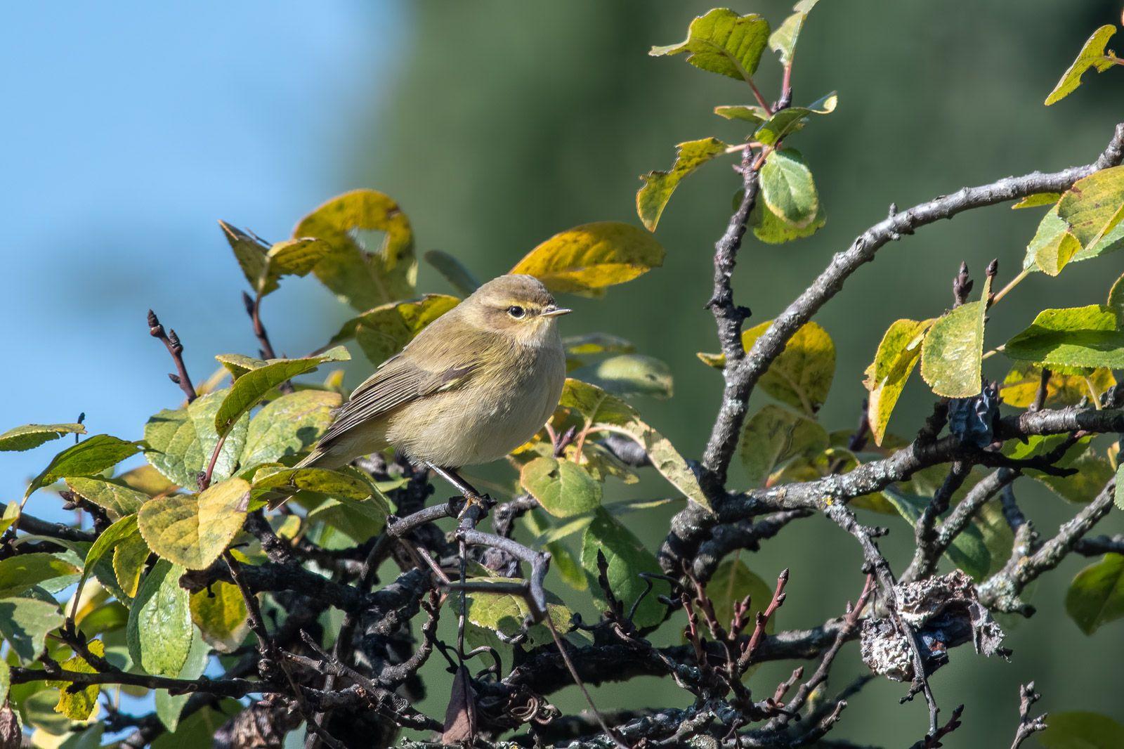 Les oiseaux au jardin cet automne